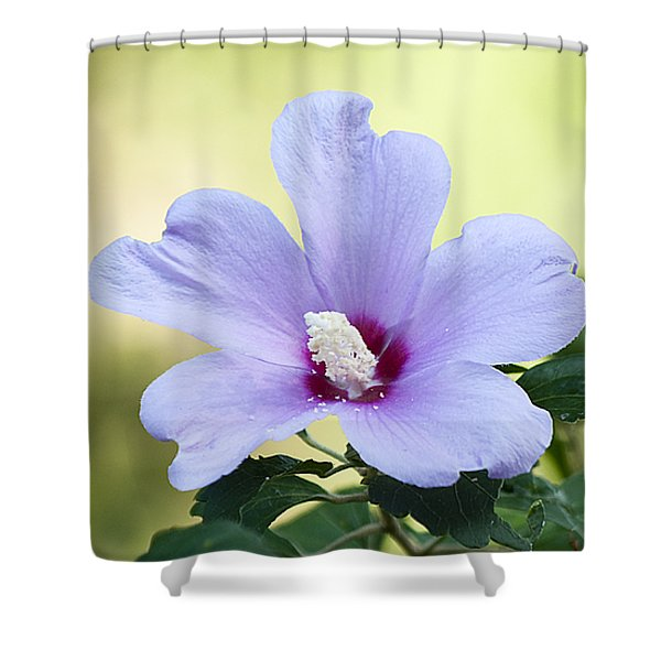 Purple Althea Shower Curtain by Kenneth Albin