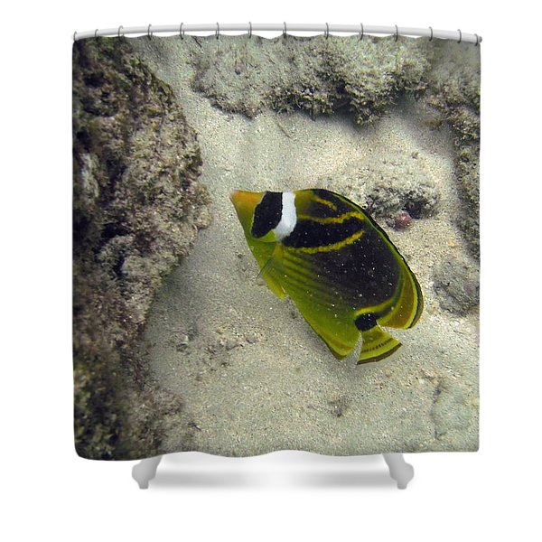 Raccoon Butterflyfish Shower Curtain by Michael Peychich