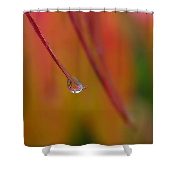 Raindrop Shower Curtain by Juergen Roth