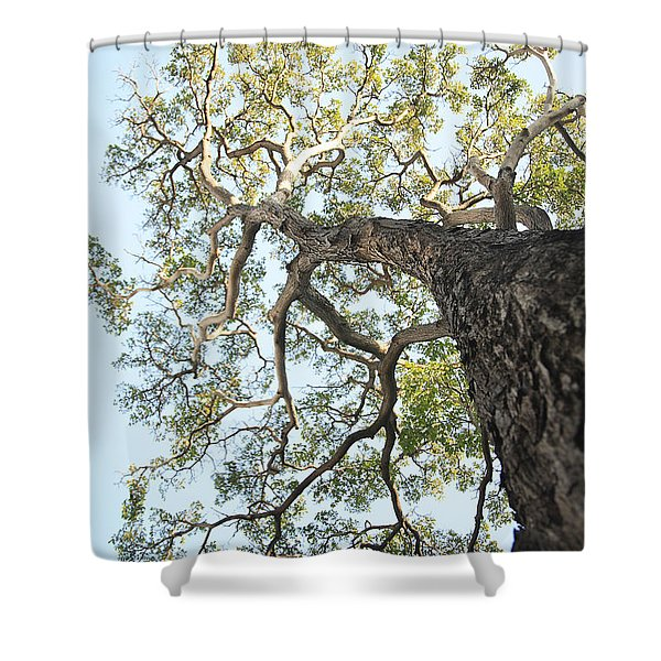Reaching for the Sky Shower Curtain by Brandon Tabiolo - Printscapes