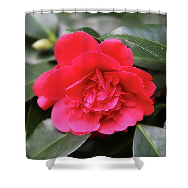 Red Camellia Shower Curtain by Dean  Triolo