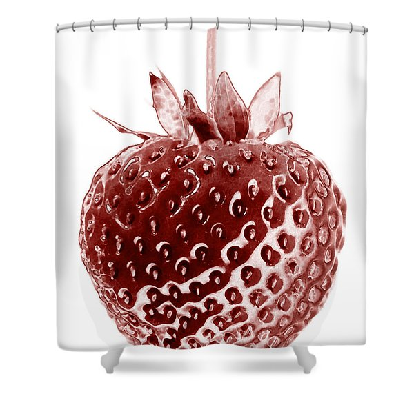 Shower Curtains - Red Strawberry Botanical Illustration Shower Curtain by Frank Tschakert