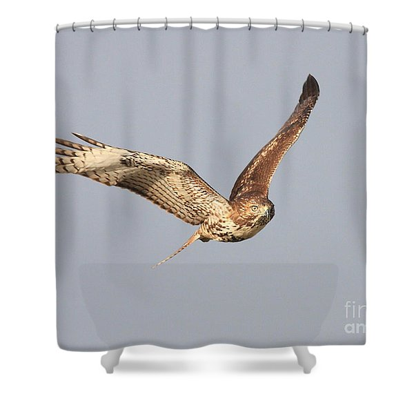 Red Tailed Hawk - 20100101-7 Shower Curtain by Wingsdomain Art and Photography