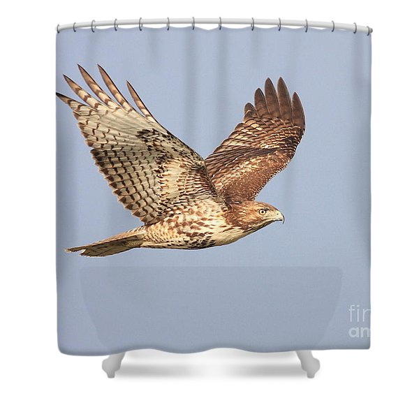 Red Tailed Hawk 20100101-1 Shower Curtain by Wingsdomain Art and Photography