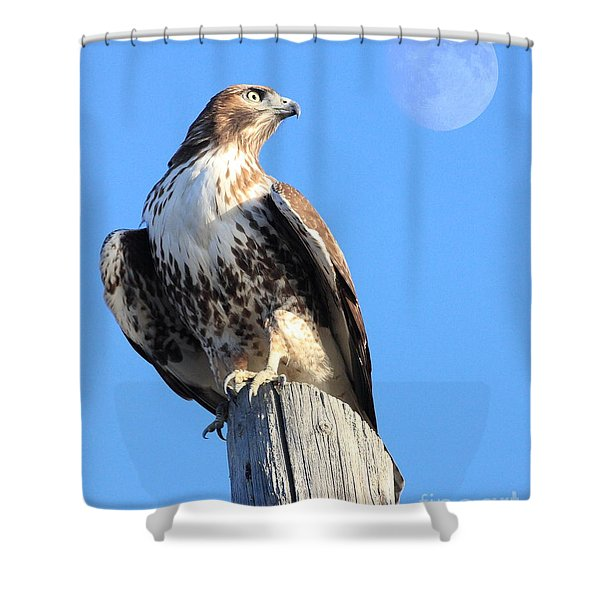 Red Tailed Hawk and Moon Shower Curtain by Wingsdomain Art and Photography