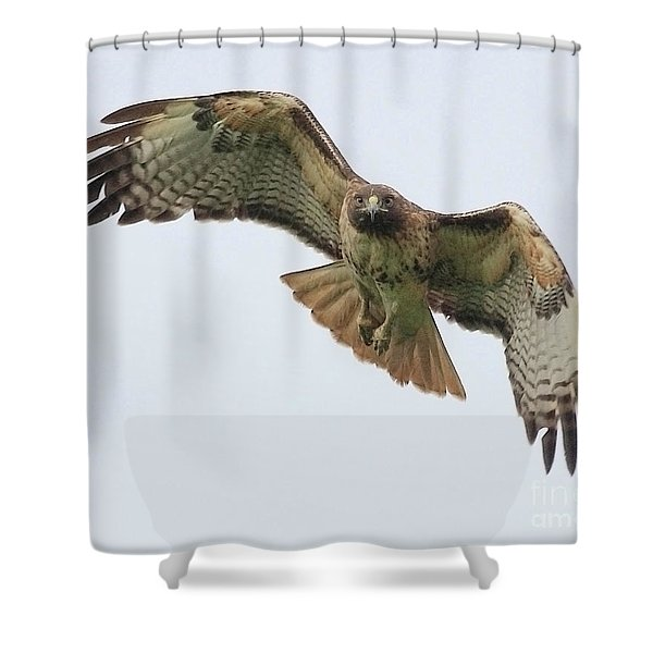 Red Tailed Hawk Finds Its Prey Shower Curtain by Wingsdomain Art and Photography