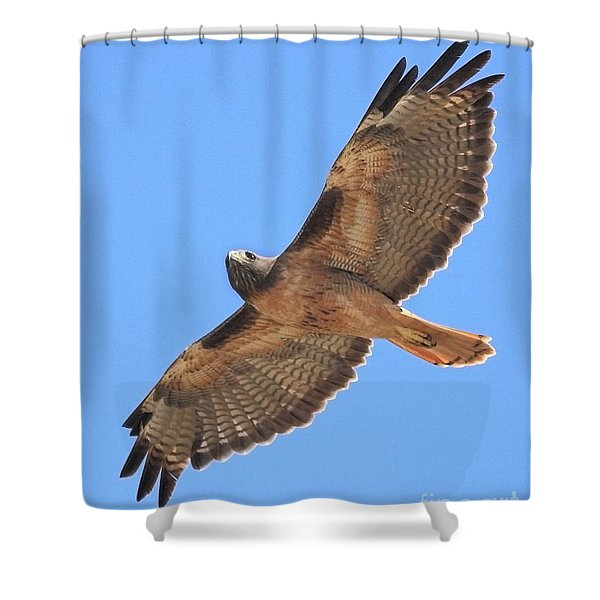 Red Tailed Hawk in flight Shower Curtain by Wingsdomain Art and Photography