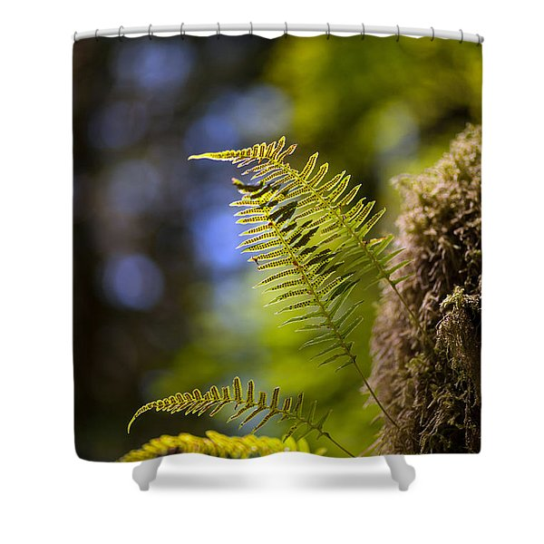 Renewal Ferns Shower Curtain by Mike Reid