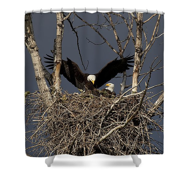 Returning Home to the Nest Shower Curtain by Mike  Dawson