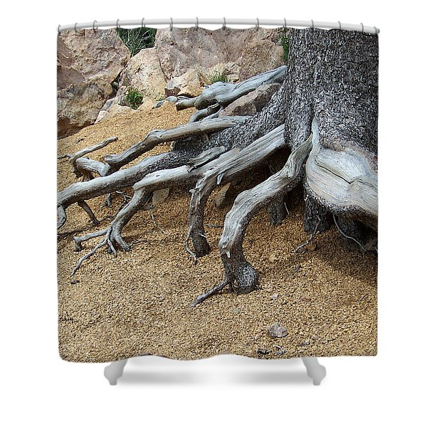 Roots Shower Curtain by Ernie Echols