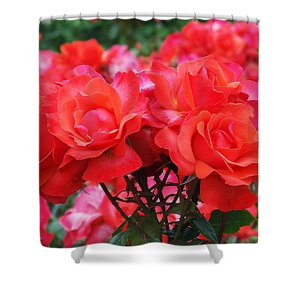 Rose Abundance Shower Curtain by Rona Black