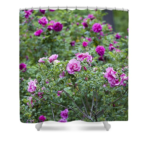 Rose Garden Shower Curtain by Frank Tschakert