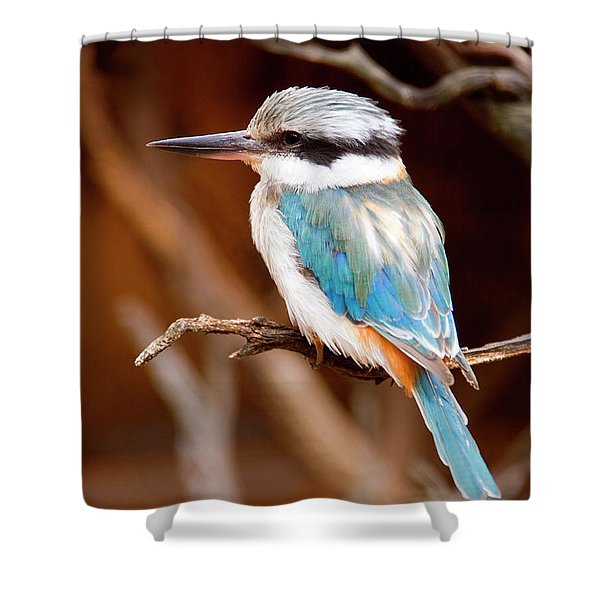 Sacred KingFisher Shower Curtain by Mike  Dawson
