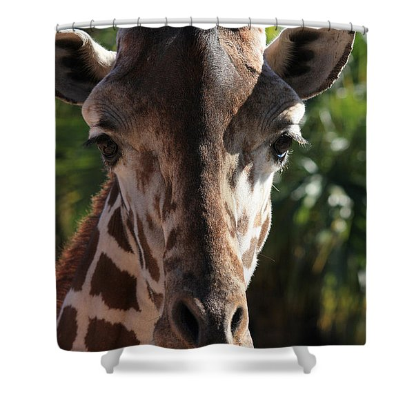 Say Cheese Card Shower Curtain by Carol Groenen