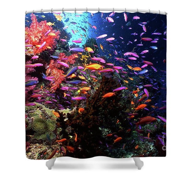 Scalefin Anthias Fish In Coral Garden Shower Curtain by Beverly Factor