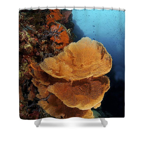Sea Fan Coral - Indonesia Shower Curtain by Steve Rosenberg - Printscapes