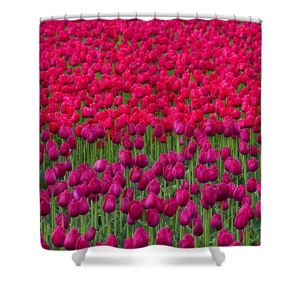 Sea Of Tulips Shower Curtain by Mike  Dawson