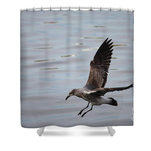 Seagull Landing Shower Curtain by Carol Groenen
