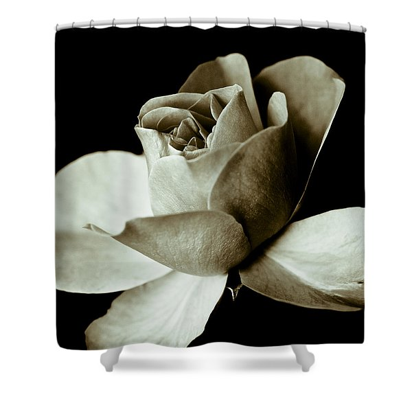 - Sepia Rose Shower Curtain by Frank Tschakert