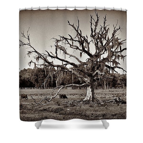 Shade Free - Sepia Shower Curtain by Christopher Holmes