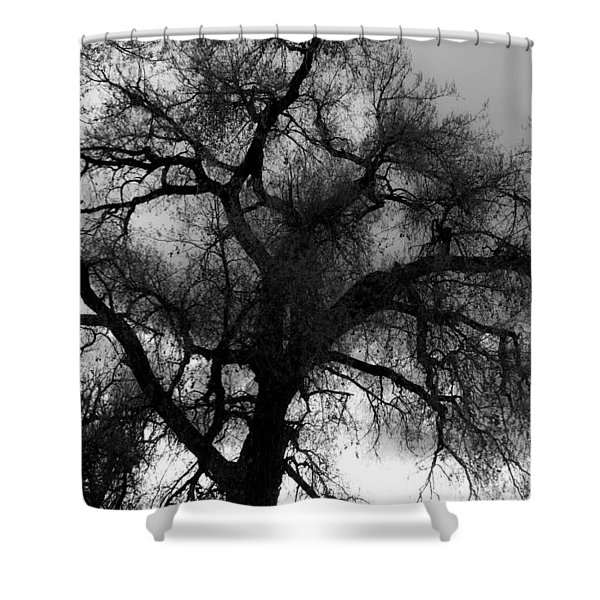 Silhouette Shower Curtain by James BO  Insogna