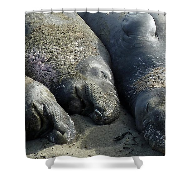 Slumber Party Shower Curtain by Methune Hively