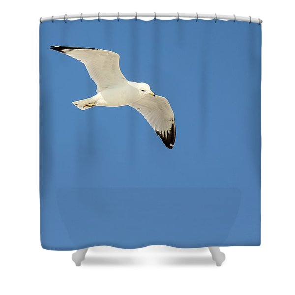 Smooth As Silk Shower Curtain by Ed Smith
