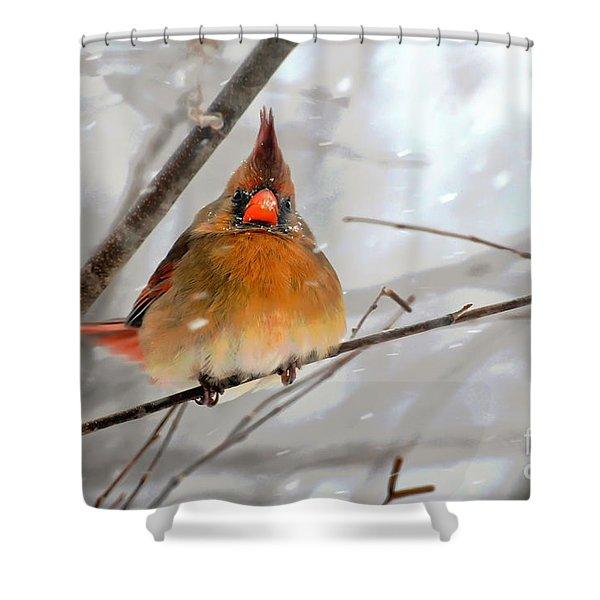 Snow Surprise Shower Curtain by Lois Bryan