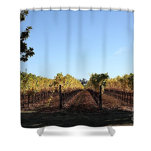 Sonoma Vineyards - Sonoma California - 5D19314 Shower Curtain by Wingsdomain Art and Photography