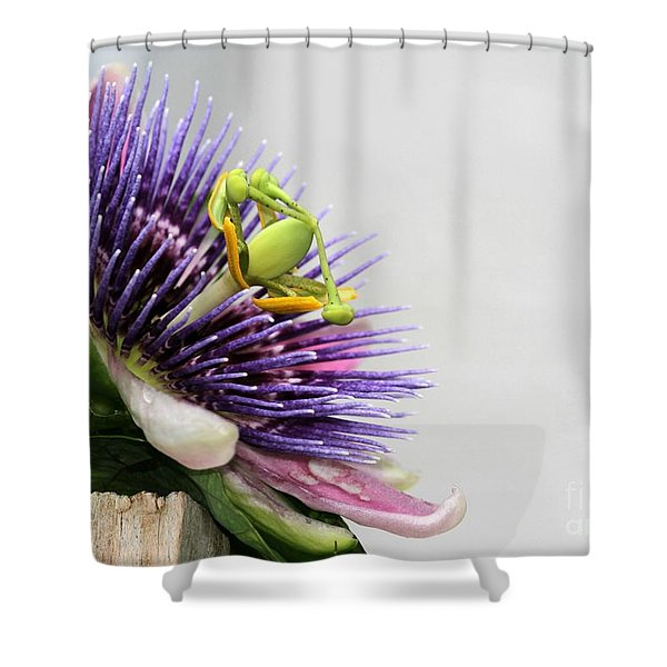Spikey Passion Flower Shower Curtain by Sabrina L Ryan