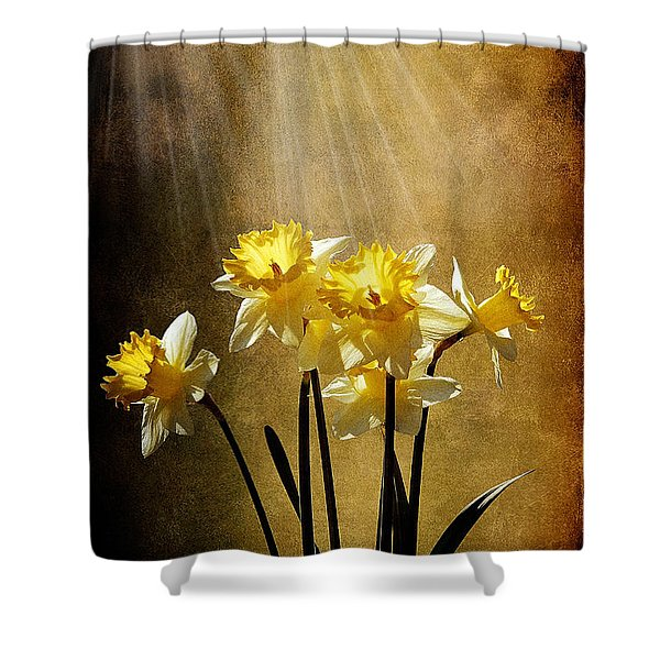 Spring Sun Shower Curtain by Lois Bryan
