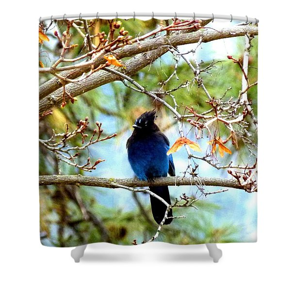 Stellar Jay Majesty Shower Curtain by Will Borden