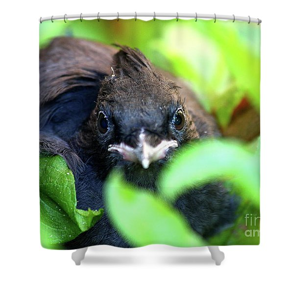 Stellers Jay Chick . 40D501 Shower Curtain by Wingsdomain Art and Photography