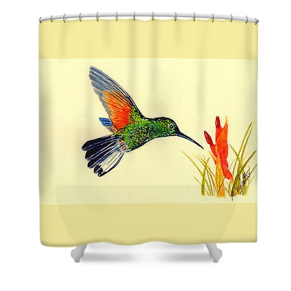 Stripe Tailed Hummingbird Shower Curtain by Michael Vigliotti