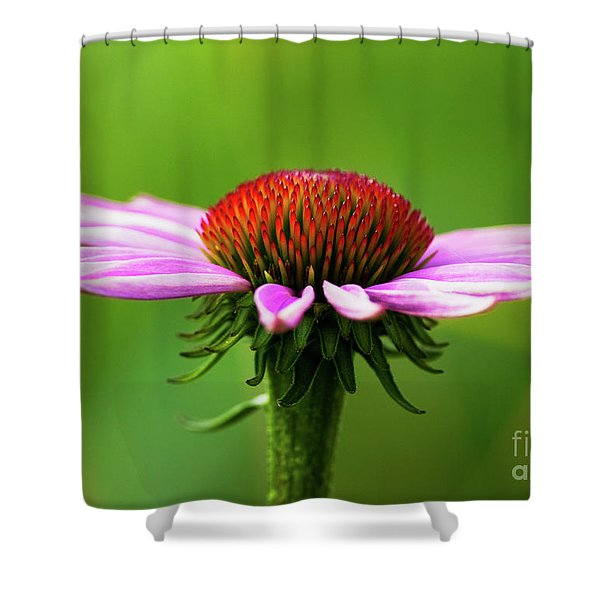 Summer Burst... Shower Curtain by Nina Stavlund