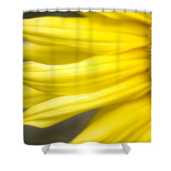Sunflower Shower Curtain by Mary Van de Ven - Printscapes