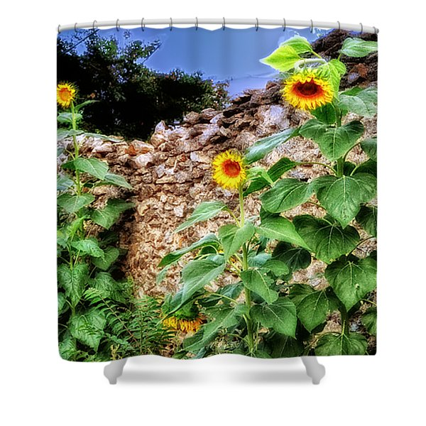 Sunflower Wall Shower Curtain by Bill Cannon