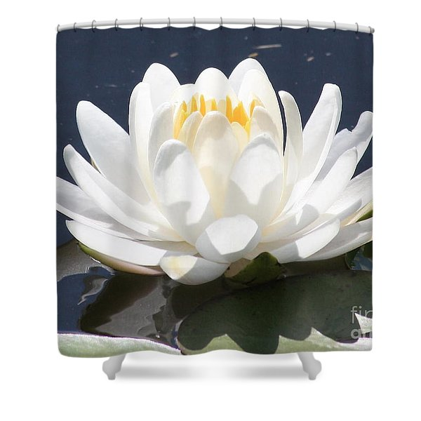 Sunlight on Water Lily Shower Curtain by Carol Groenen