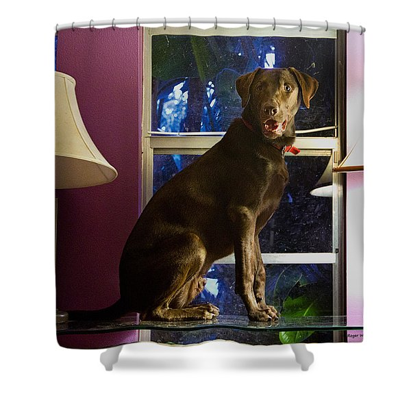 Table Ornament Shower Curtain by Roger Wedegis