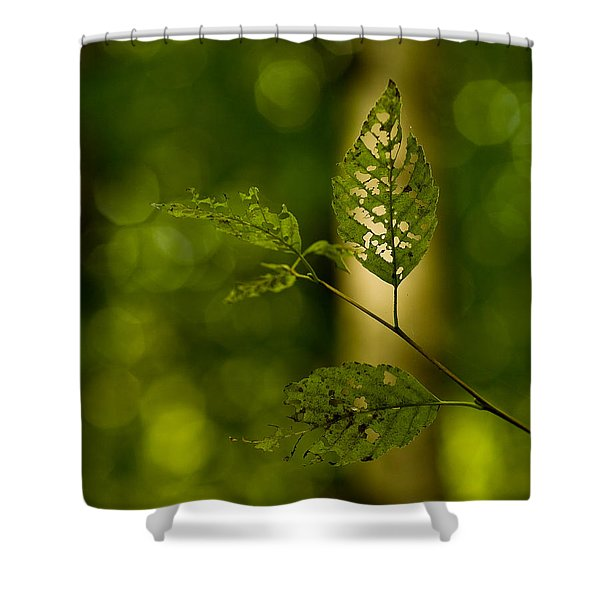 Tattered Leaves Shower Curtain by Mike Reid
