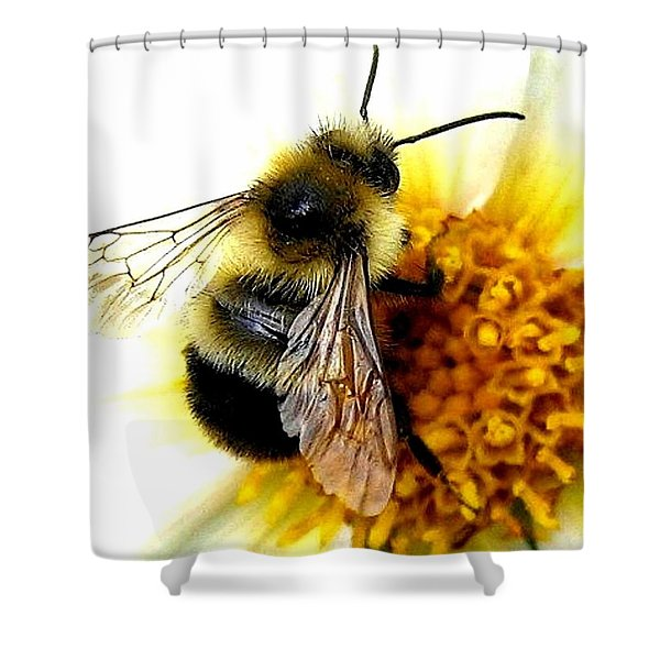 The Buzz Shower Curtain by Will Borden