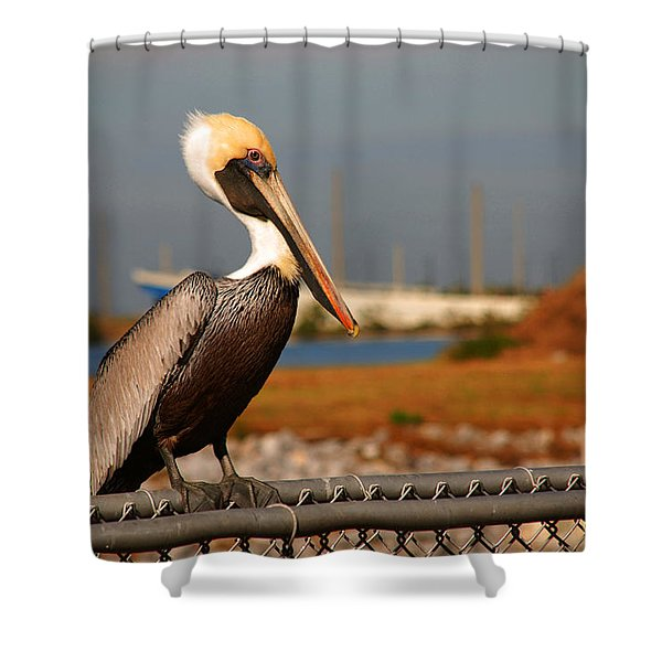 The Most Beautiful Pelican Shower Curtain by Susanne Van Hulst