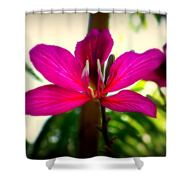 The Pink Lady Shower Curtain by Karen Wiles