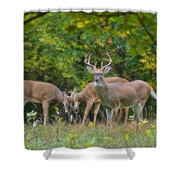 Three Bucks_0054_4463 Shower Curtain by Michael Peychich