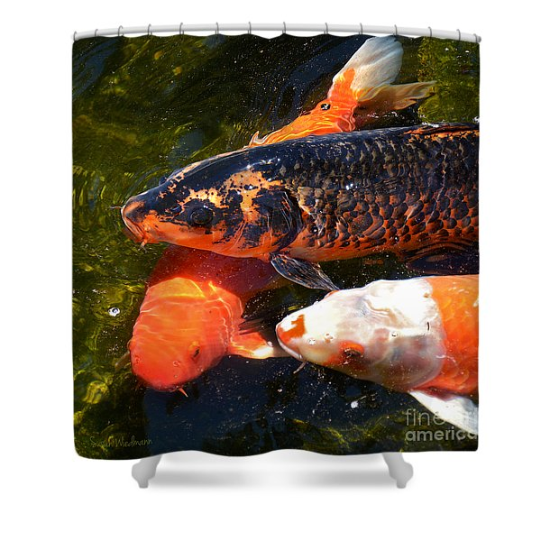 Three Koi Waiting Shower Curtain by Susan Wiedmann