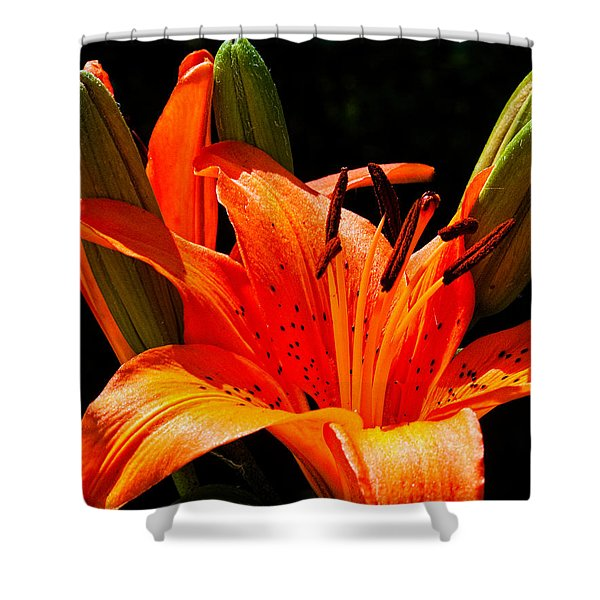 Tiger Lily Shower Curtain by Christopher Holmes