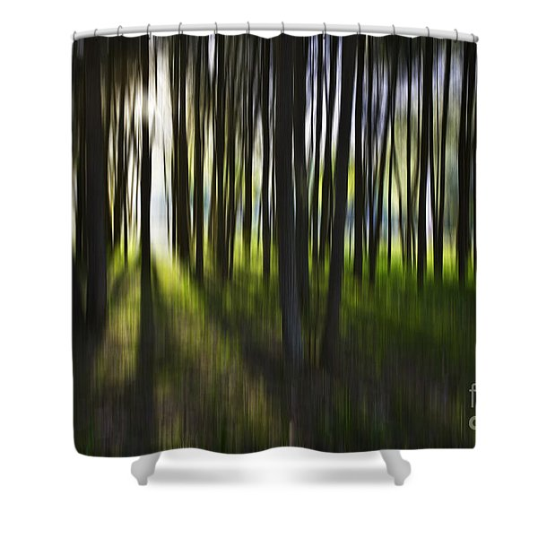 Tree abstract Shower Curtain by Sheila Smart