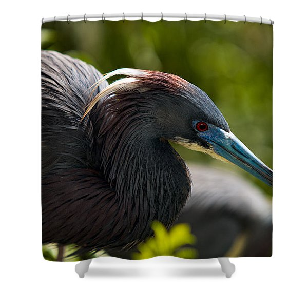 Tri-colored Heron Shower Curtain by Christopher Holmes