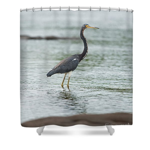 Tricolored.. Shower Curtain by Nina Stavlund
