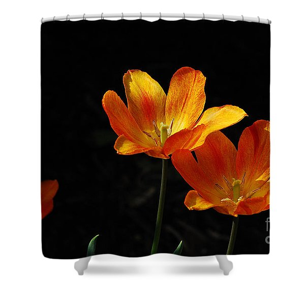 Triples Shower Curtain by Lois Bryan